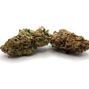 Romulan - Indica - Displayed in front of a white background