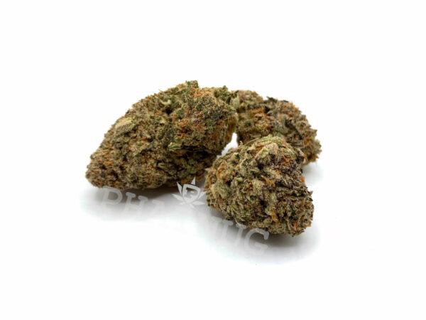 Black D.O.G. - Indica Hybrid Strain - 17%-22% THC