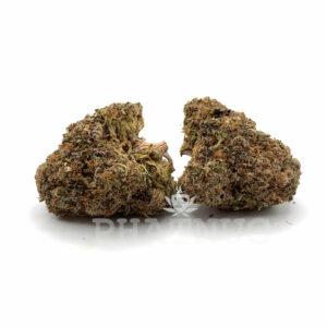 God Bud - Pure Hybrid Strain - 22% THC