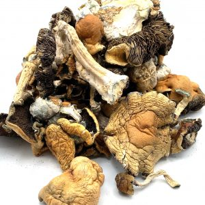 Mazatapec Mushrooms - Psilocybe Cubensis